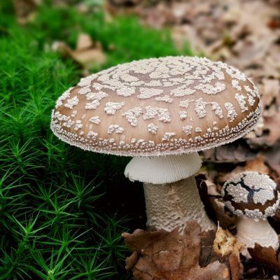 mushroom-2678542_960_720