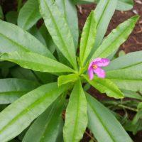 ginseng-thailand-1164102_1280